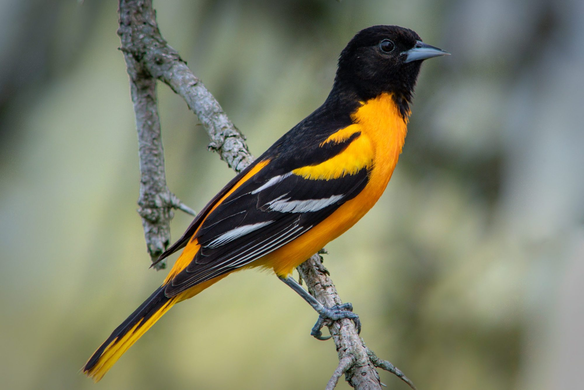 Black and Latinx Birders Scholarship