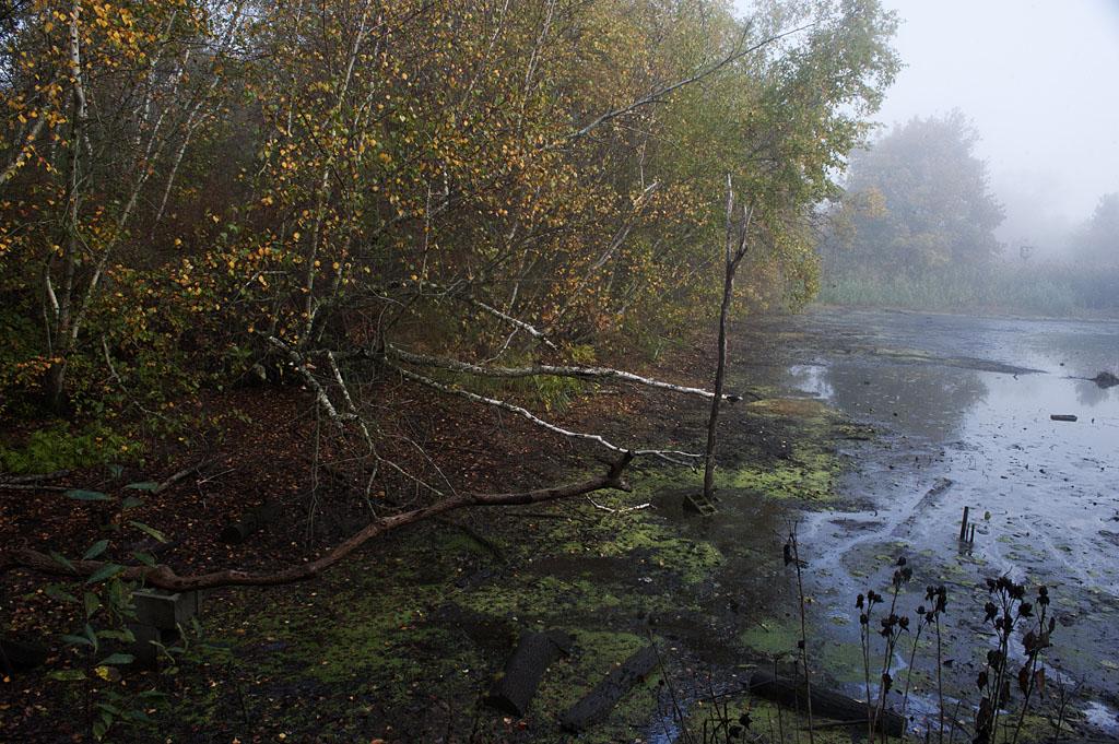 Big John's Pond by Johann Schumacher