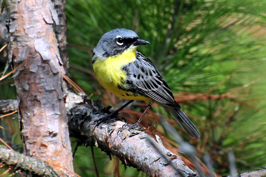 harmful bird names