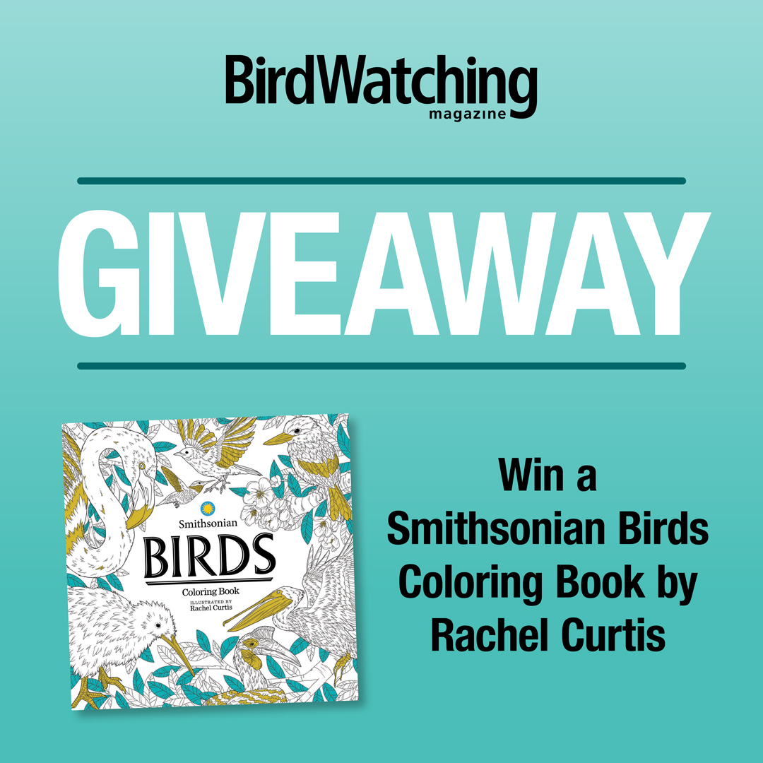 Coloring Book Giveaway