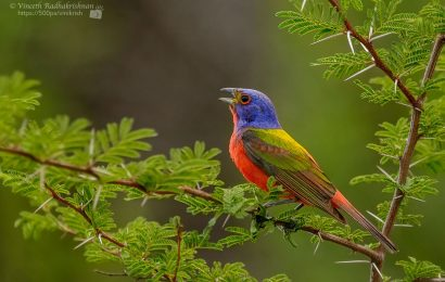 Feds identify 269 'Birds of Conservation Concern'