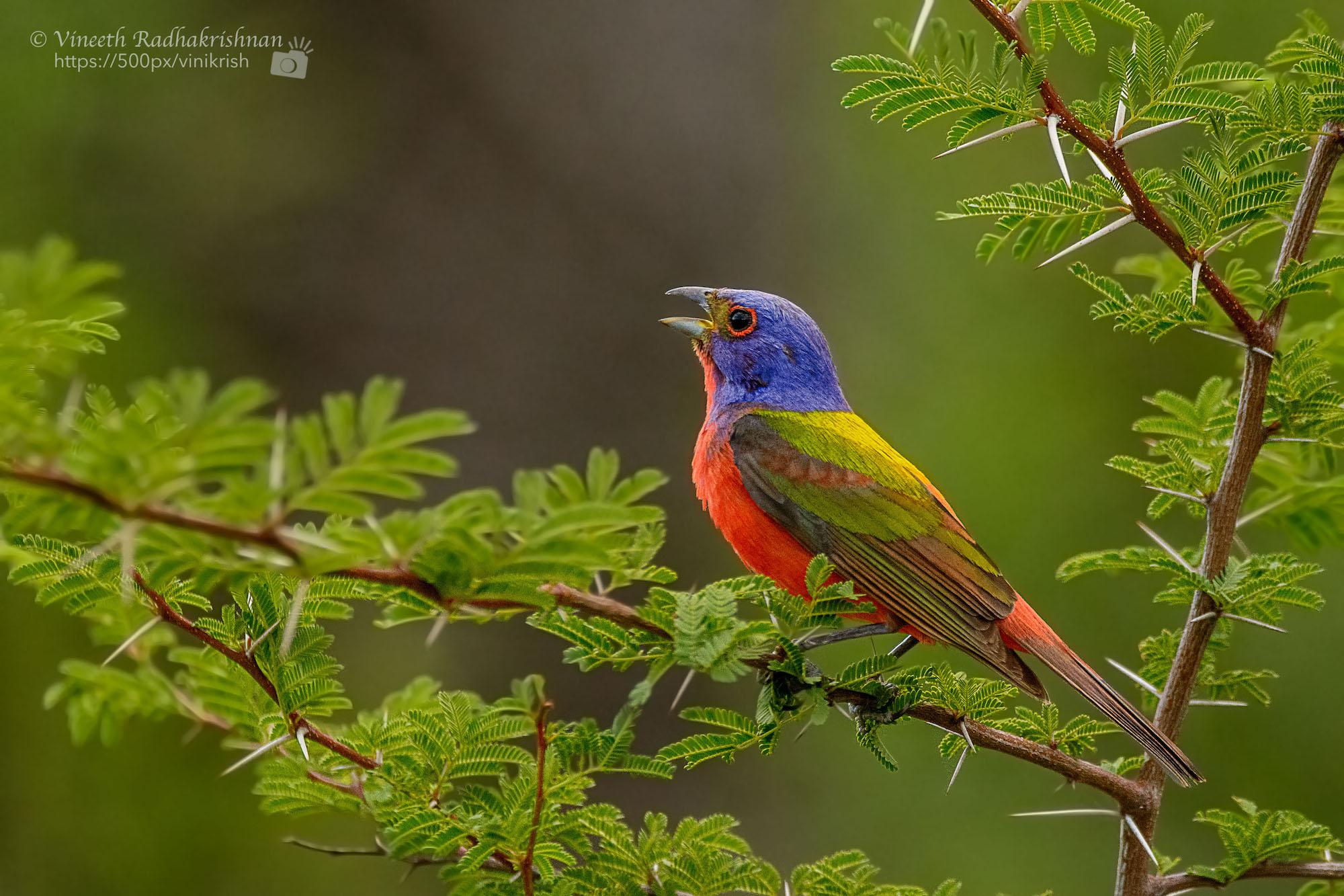 Birds of Conservation Concern