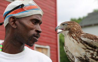 Documentary highlights master falconer Rodney Stotts