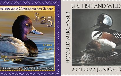 New Duck Stamps on sale as changes proposed for future stamps