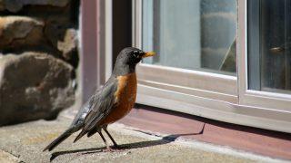 bird-friendly building