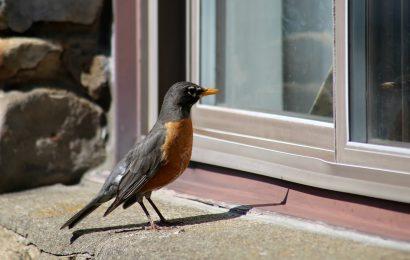 Developers sue over bird-friendly building code