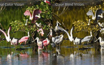 Refuge to unveil scope for colorblind visitors