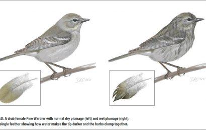 Great birding locations in Northern California