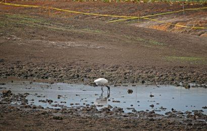 Lake Jackson sinkhole opens birding hotspot in Florida