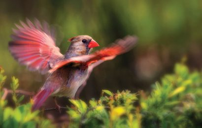 The best camera settings for bird photography
