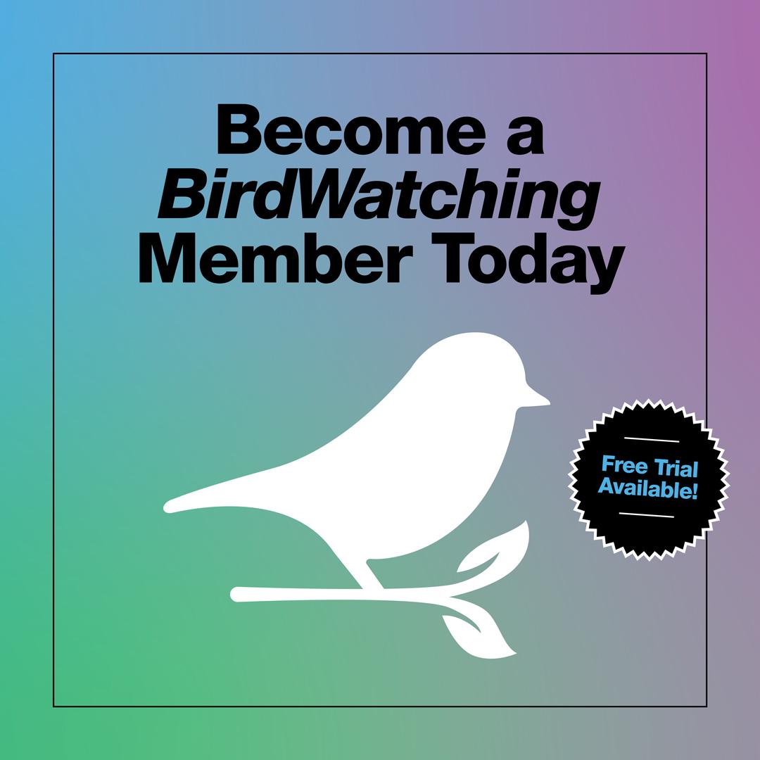 BirdWatching Membership