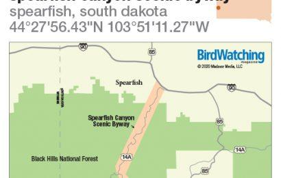 313. Spearfish Canyon Scenic Byway, Spearfish, South Dakota