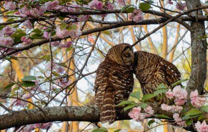 2021 BirdWatching Photography Awards finalists