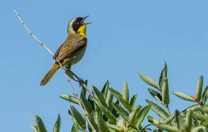 Guides about birdsong and photography, and more books for birders
