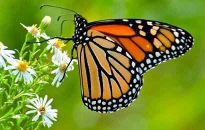 EPA: Neonicotinoids harm vast majority of all endangered species