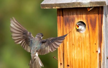 Books about Tree Swallows, conservation, and more