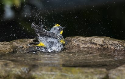 How to help birds during heat waves and droughts