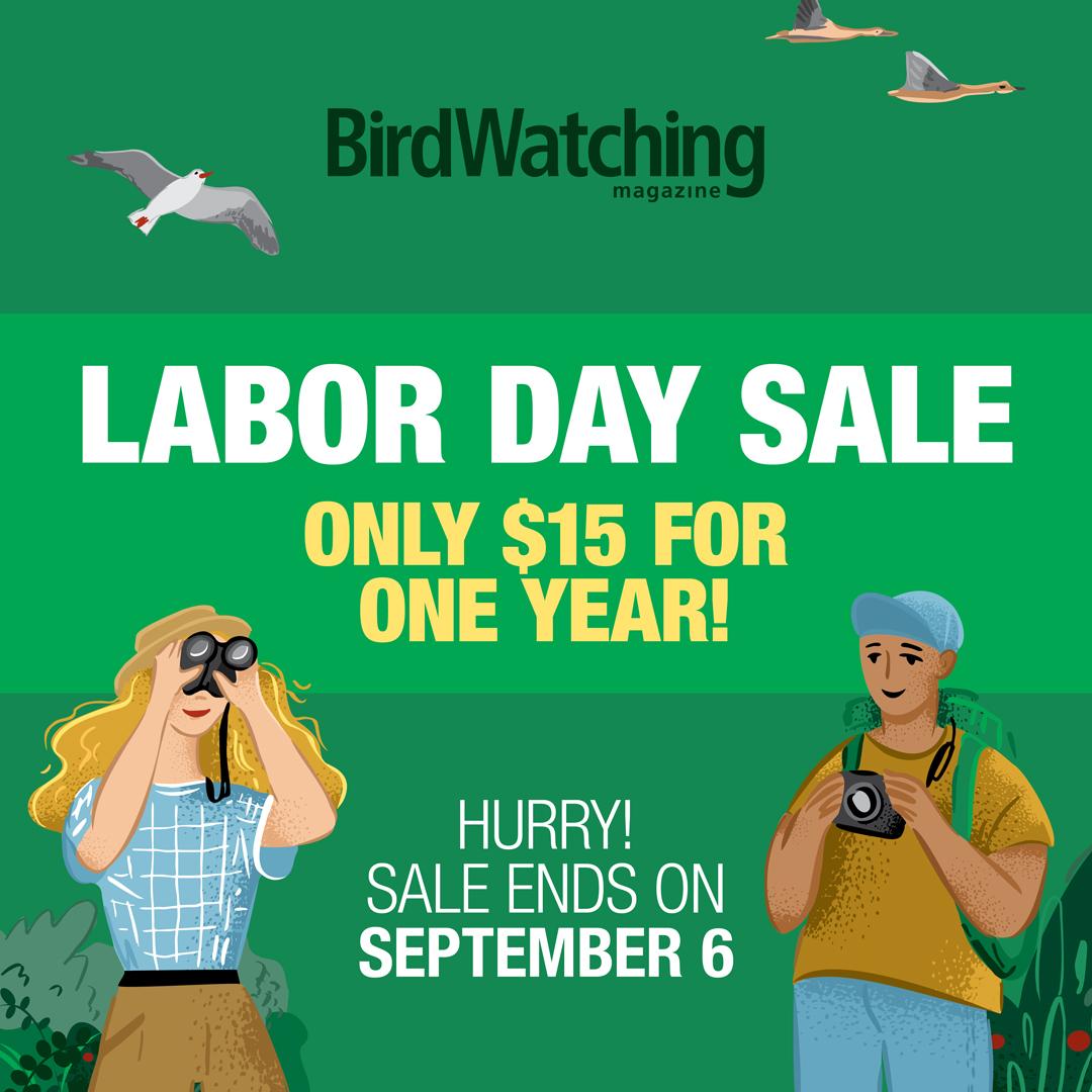 Labor Day Sale