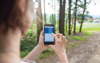 BirdNET app is a game-changer for bird research