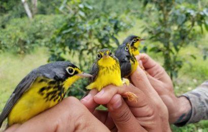 Great Wisconsin Birdathon funds to help birds throughout the Americas