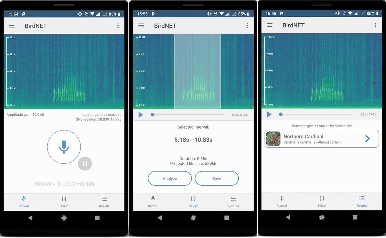 BirdNET app's three steps.