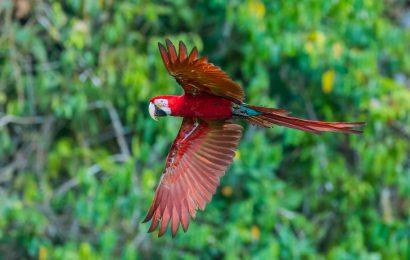 Awaken your birding adventures in Peru
