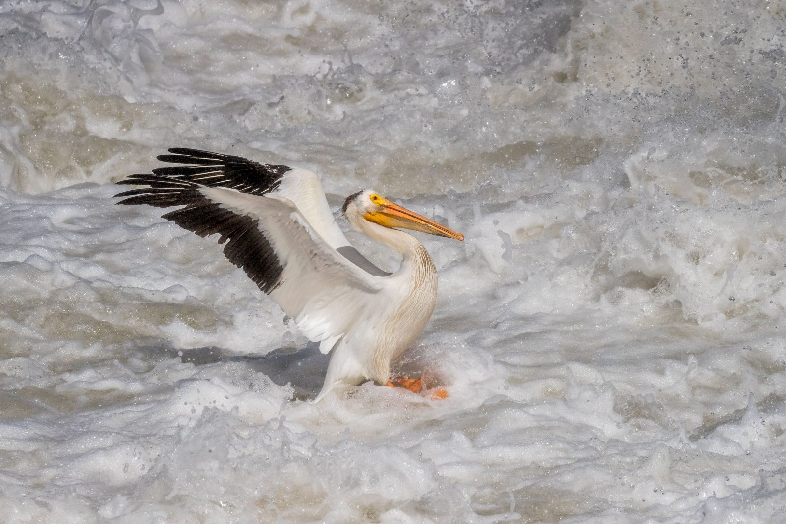 Pelican Landing in Torrent