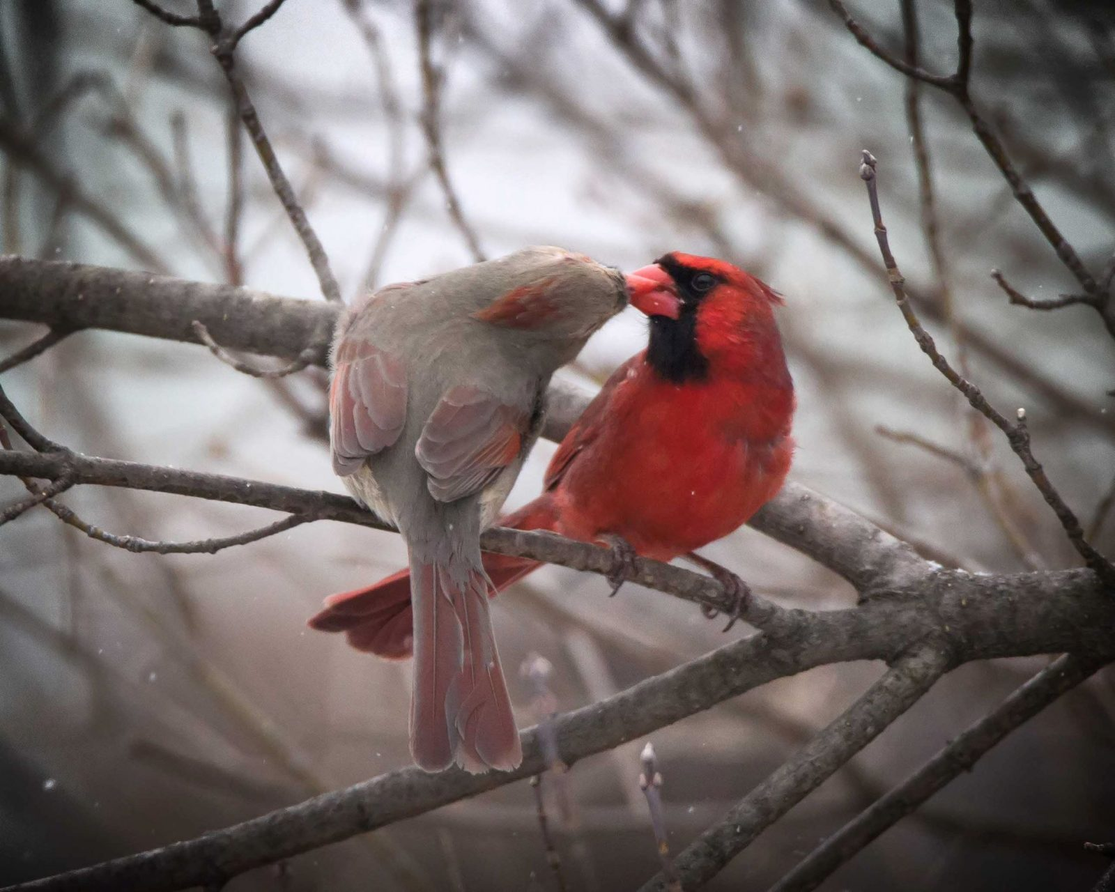 Loving cardinals