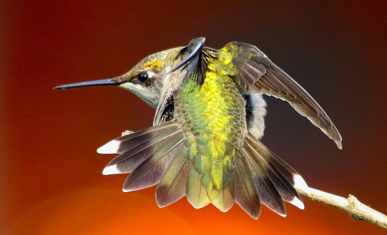 Hummer in attack mode!